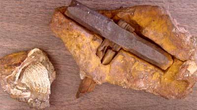 Palu purbakala berumur 100 juta tahun