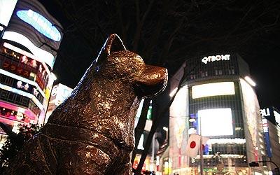 Patung Hachiko tampak perkotaan malam