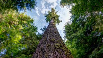 Pohon di hutan dengan sekitarnya blur