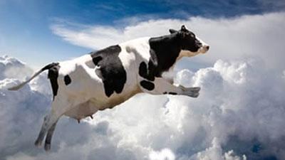 Sapi yang sedang melompat dan akan terjun bebas dari langit