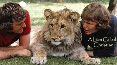 Christian si singa, john randall, dan ace bourke