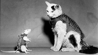 Tikus hektor dengan seekor kucing