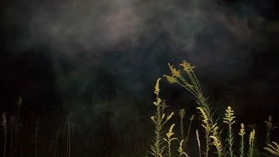 Titik dingin atau cold spot yang dikaitkan dengan hantu di hutan
