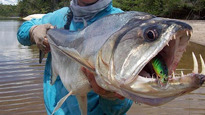 payara fish