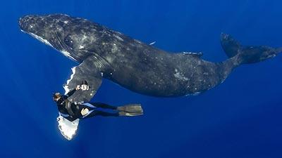 52 blue whale