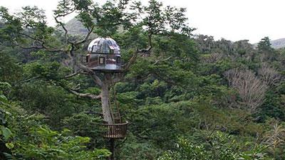 Beach Rock Treehouse