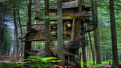 Three Story Treehouse