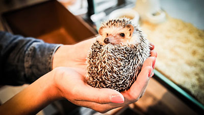 Harry Hedgehog Cafe