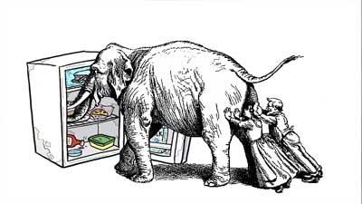 elephant to refrigator