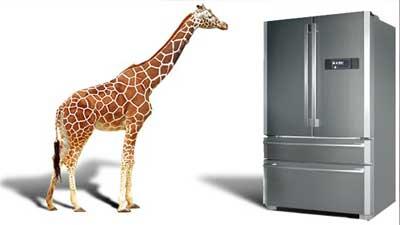 giraffe refrigator